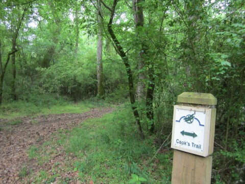 Cook's Trail at Sandy Creek Nature Center, Athens, GA