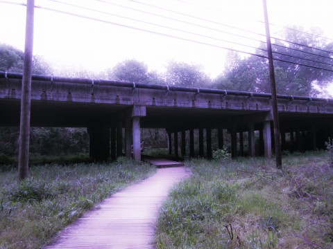 Under 441 Bridge On Cook's Trail