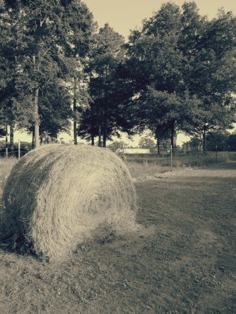 A Hay Bale In Georgia