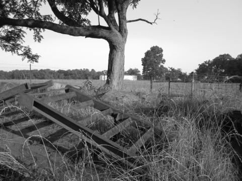 A Tree And Farm Tools