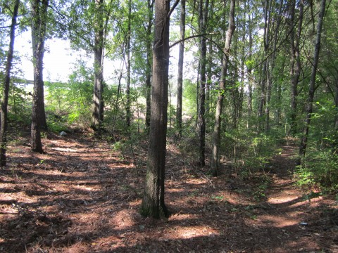 Wooded Running Trail