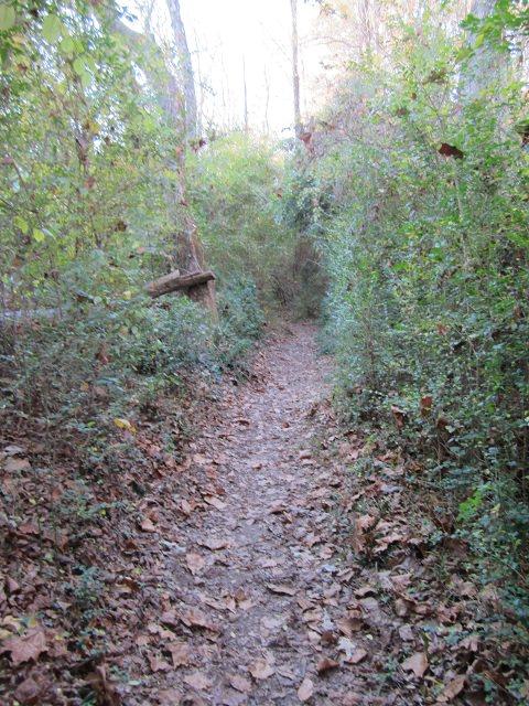 Orange Trail Near Oconee River