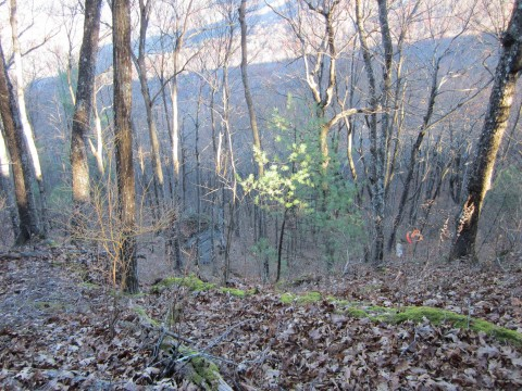 Walking Near Cold Springs Gap