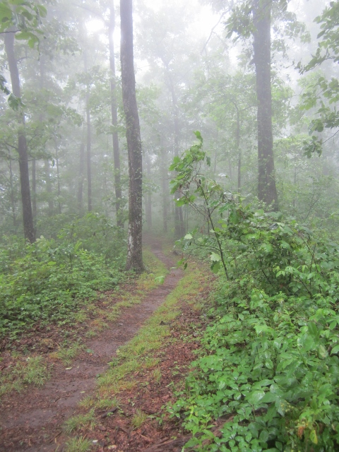 Rain Near Horse Gap on the Appalachian Trail