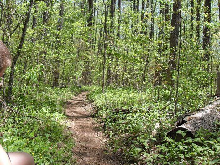 Woody Gap to Neels Gap on the Appalachian Trail 1
