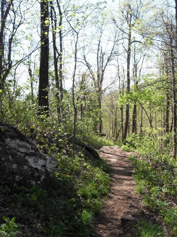Woody Gap to Neels Gap on the Appalachian Trail 2