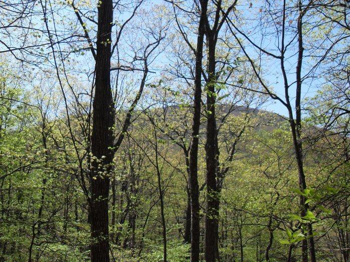 Woody Gap to Neels Gap on the Appalachian Trail 3