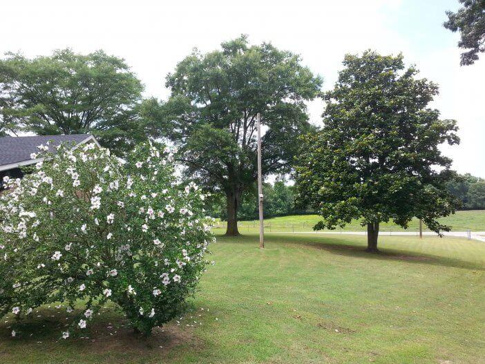 Bushes in Bloom 1