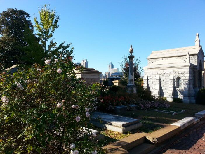Gardenia bush in Oakland Cemetery