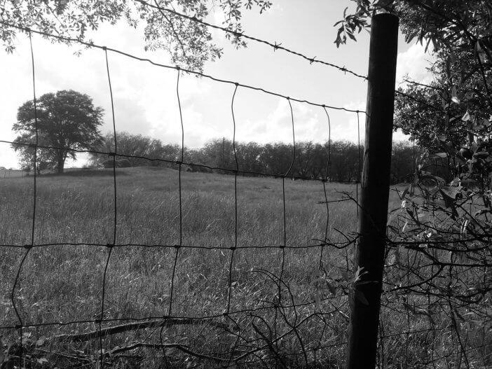 Pasture in Athens, GA 1