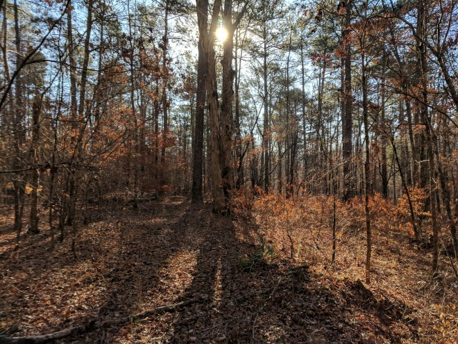 Oconee National Forest in November