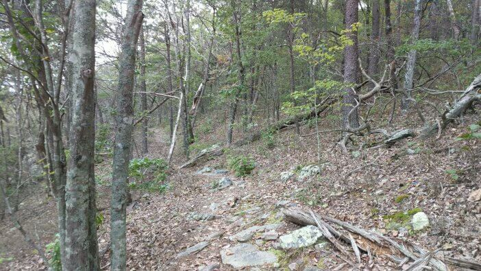 Hiking Cheaha Wilderness 2