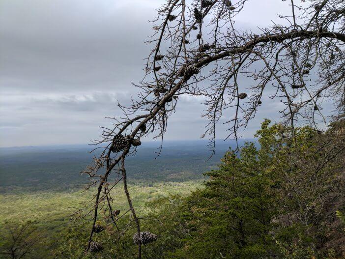 Hiking Cheaha Wilderness 3
