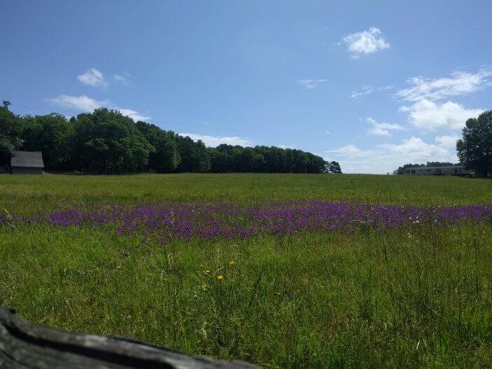 Wildflowers in Oglethorpe County 1
