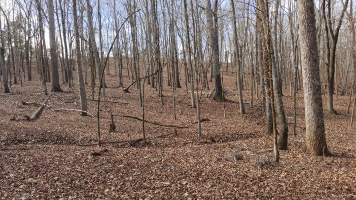 Hardwoods on Burgess Mountain in Oconee National Forest 1