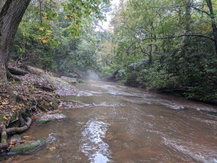 Rice Creek 1