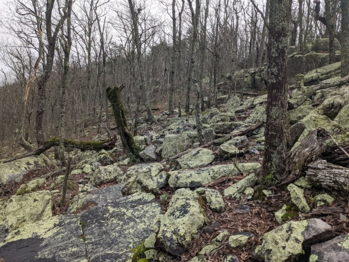 Hiking Nubbin Creek / Pinhoti Trail in Cheaha Wilderness 9