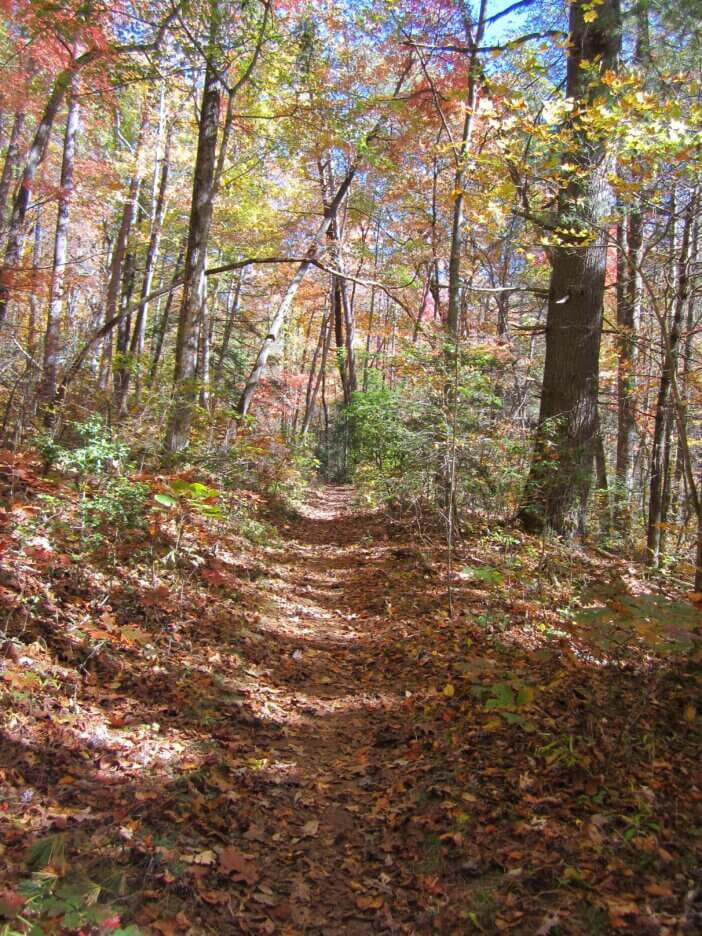 Cooper Gap to Woody Gap On The Appalachian Trail 7