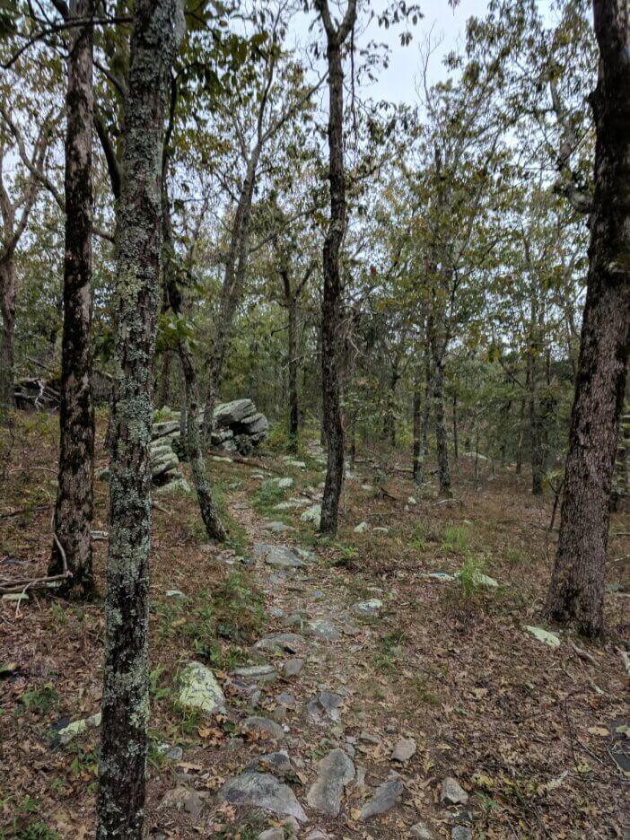 Hiking Cheaha Wilderness 5